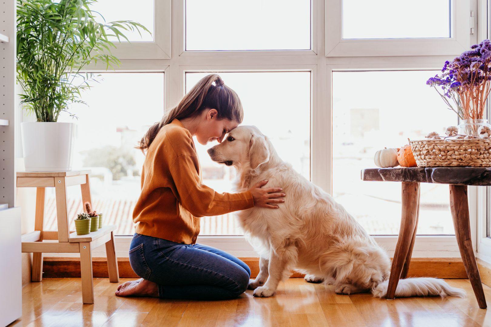 mascotas terapéutico